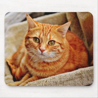 Alfombrilla De Ratón Cute Orange Cat