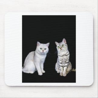 Alfombrilla De Ratón Dos gatos británicos del pelo corto en fondo negro