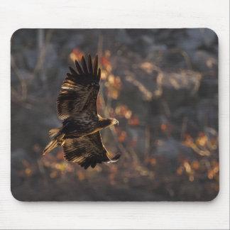 Alfombrilla De Ratón Eagle sobre la hora de oro