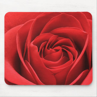 Alfombrilla De Ratón Flor vibrante del rosa rojo
