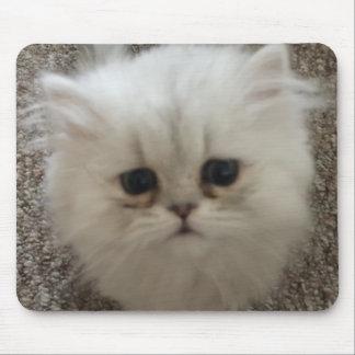 Alfombrilla De Ratón Gatito mullido blanco de los ojos tristes que mira