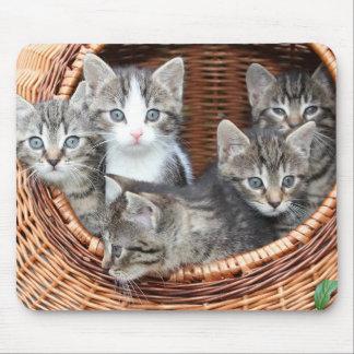 Alfombrilla De Ratón Gatitos del gato del gatito en un cojín de ratón