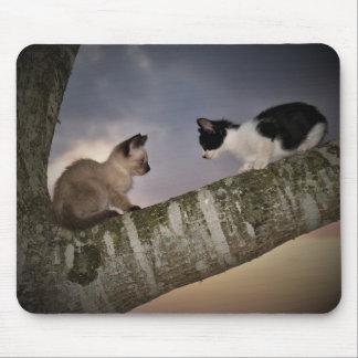 Alfombrilla De Ratón Gatitos en duelo