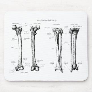 Alfombrilla De Ratón Huesos de los miembros más bajos