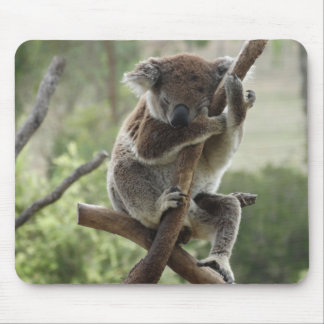 Alfombrilla De Ratón Koala soñolienta Mousepad