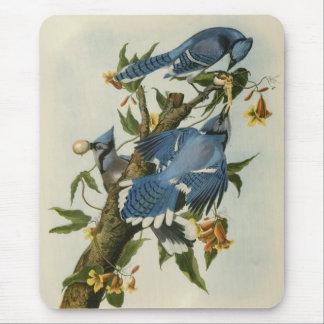 Alfombrilla De Ratón Los arrendajos azules de Audubon