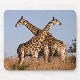 Alfombrilla De Ratón Mauspad jirafa
