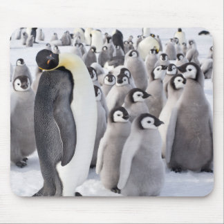 Alfombrilla De Ratón Mousepad del pingüino de emperador