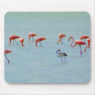 Alfombrilla De Ratón Multitud gris y rosada de los flamencos en el lago