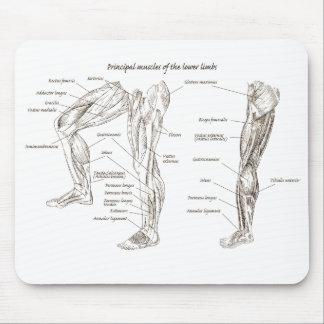 Alfombrilla De Ratón Músculos de la parte inferior del cuerpo