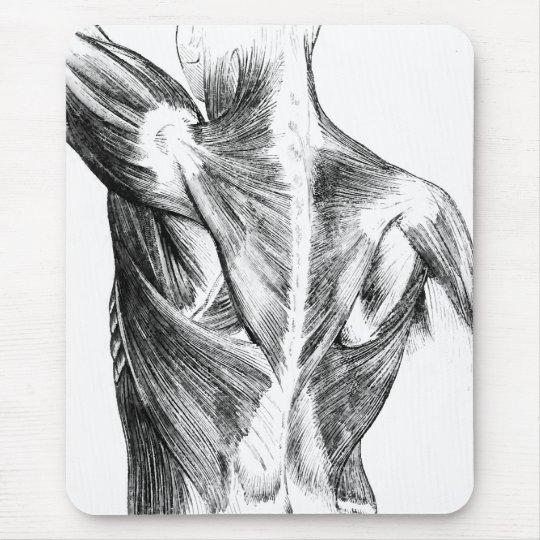 Alfombrilla De Ratón Músculos traseros de la anatomía el | del ...