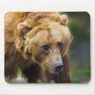 Alfombrilla De Ratón Oso grizzly