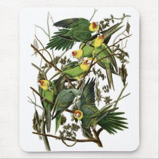 Alfombrilla De Ratón Parakeets de Carolina de Audubon