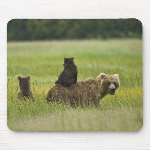 Alfombrilla De Ratón Parque nacional de Clark de los E.E.U.U., Alaska,