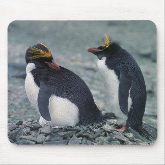 Alfombrilla De Ratón Pingüinos de los macarrones