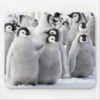 Alfombrilla De Ratón Polluelos del pingüino de emperador