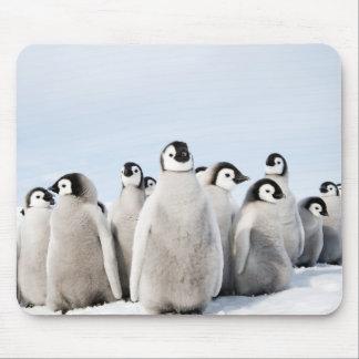 Alfombrilla De Ratón Polluelos del pingüino de emperador - cojín de