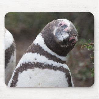 Alfombrilla De Ratón Retrato del pingüino de Magellanic