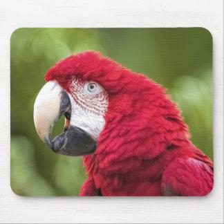 Alfombrilla De Ratón Sr. Macaw