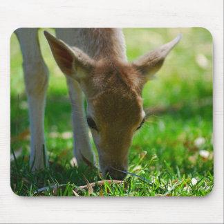 Alfombrilla De Ratón Va el verde para el antílope de los ciervos