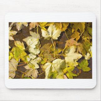Alfombrilla De Ratón Vista superior de las hojas de un otoño mojadas