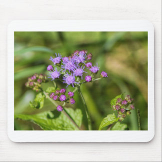 Alfombrilla De Ratón Wildflowers púrpuras del Ageratum