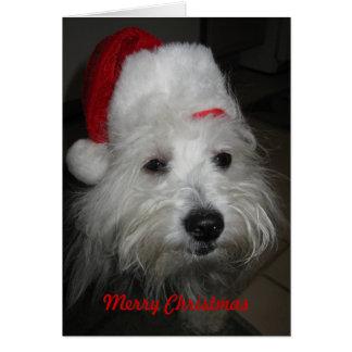 Algodón en tarjeta de Navidad divertida del gorra