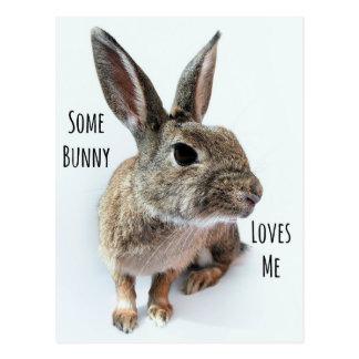 Algún conejito me ama conejo Pascua de la Postal
