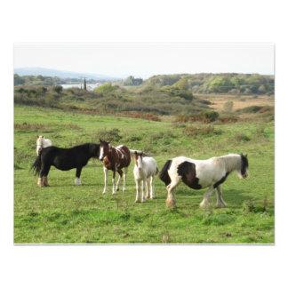 Algunos caballos comunicados personales