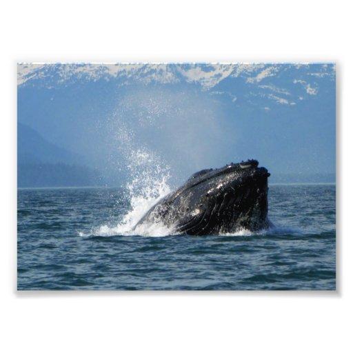 Alimentación de la ballena jorobada arte con fotos