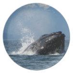 Alimentación de la ballena jorobada platos para fiestas
