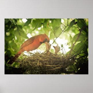 Alimentación de los cardenales póster