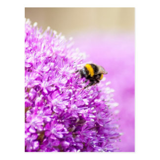 Allium con la abeja postal