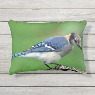 Almohada al aire libre del arrendajo azul
