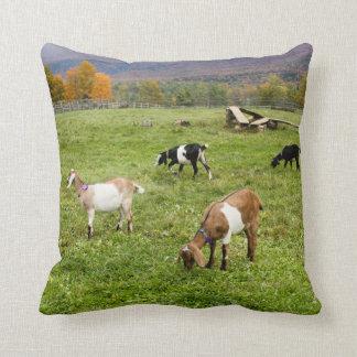 Almohada de las cabras de Vermont