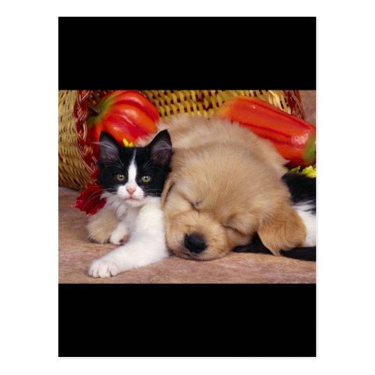 Almohada del gatito postal