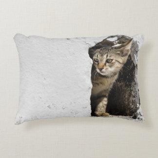 Almohada - gatito griego lindo en Santorini,