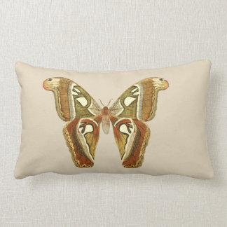 Almohada hermosa de la mariposa
