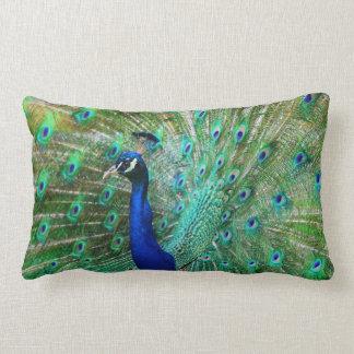 Almohada maravillosa del pavo real