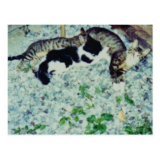 Almuerzo con sus gatitos postal