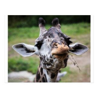 Almuerzo de la jirafa postal