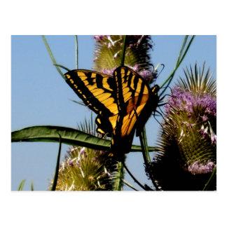 Almuerzo de la mariposa postal
