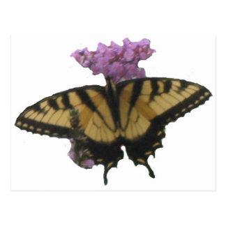 Almuerzo de la mariposa tarjetas postales