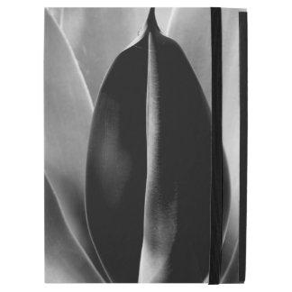 Áloe - fotografía macra de la bella arte en negro