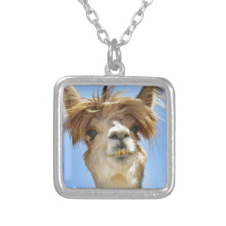 Alpaca con el pelo loco collar plateado
