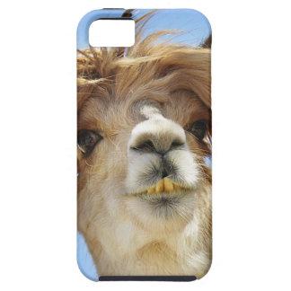 Alpaca con el pelo loco funda para iPhone SE/5/5s