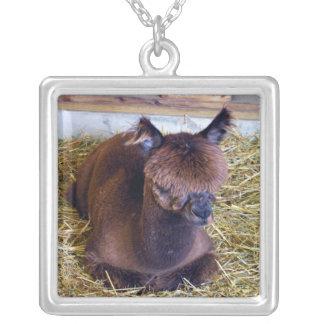 Alpaca de Brown Collar Plateado