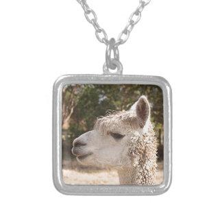 Alpaca en granja collar plateado
