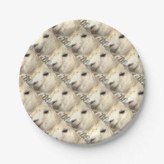 Alpaca sabe plato de papel