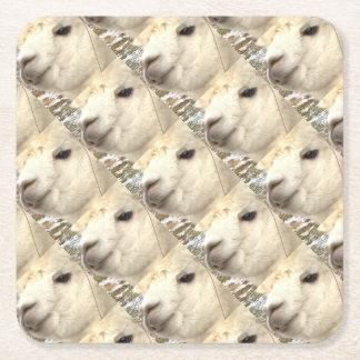 Alpaca sabe posavasos de papel cuadrado